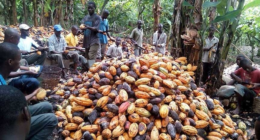 Ghana Cocoa
